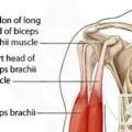 głowa długa bicepsa